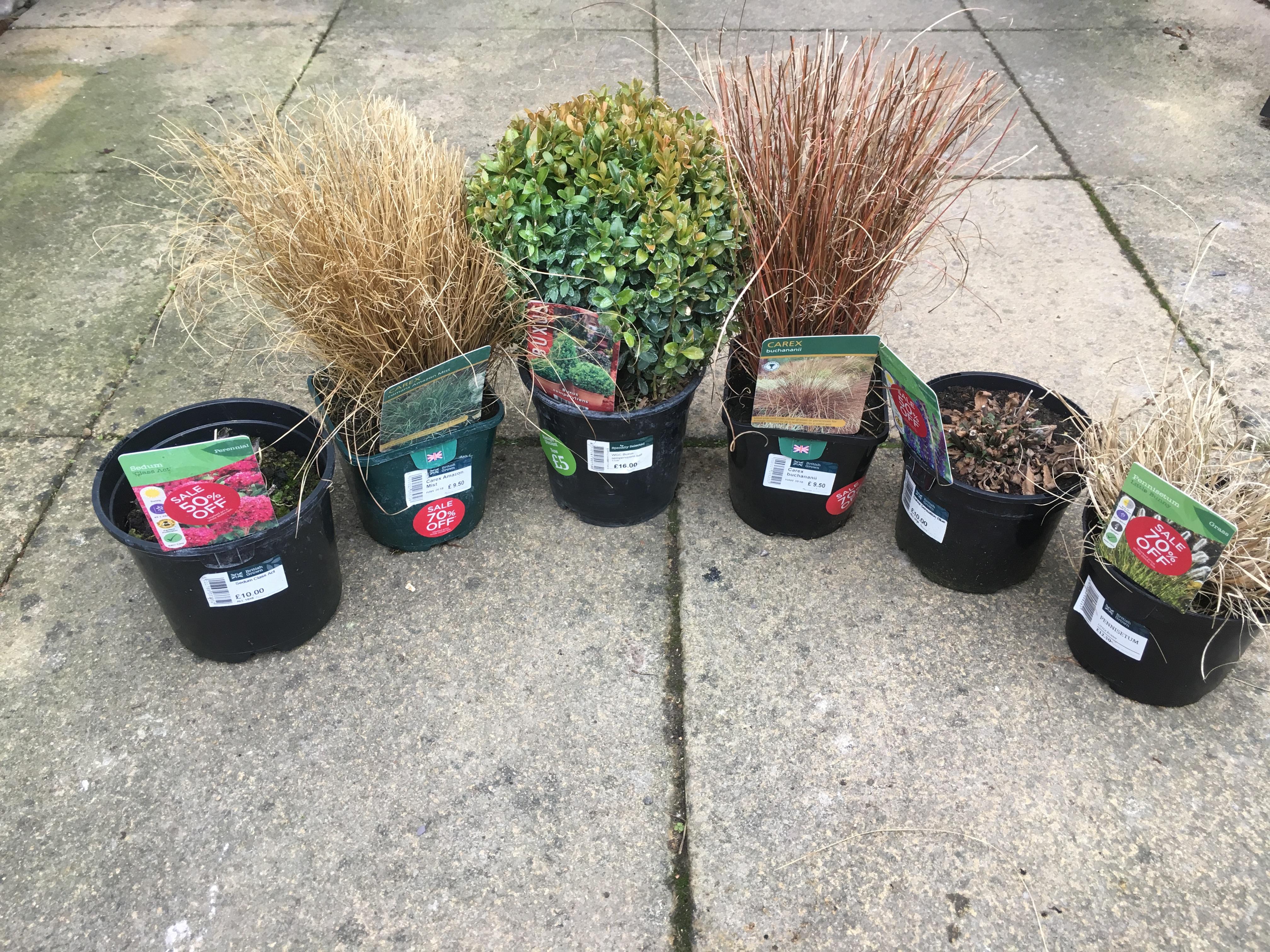January Plant Bargains