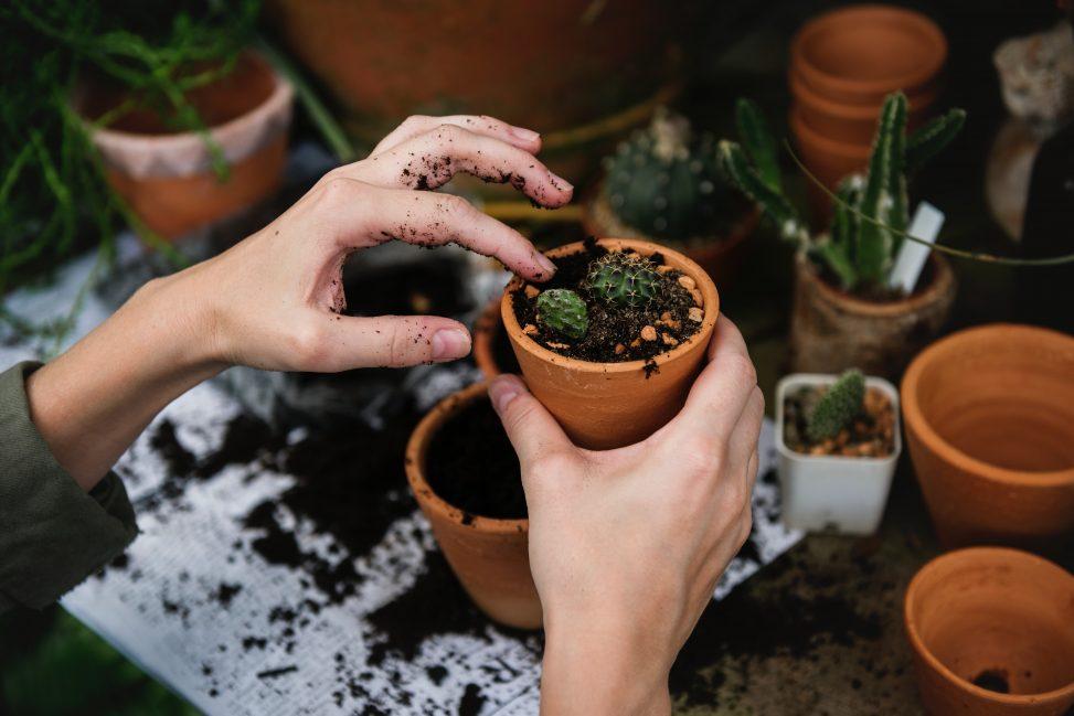 Cacti Growing - Pexels