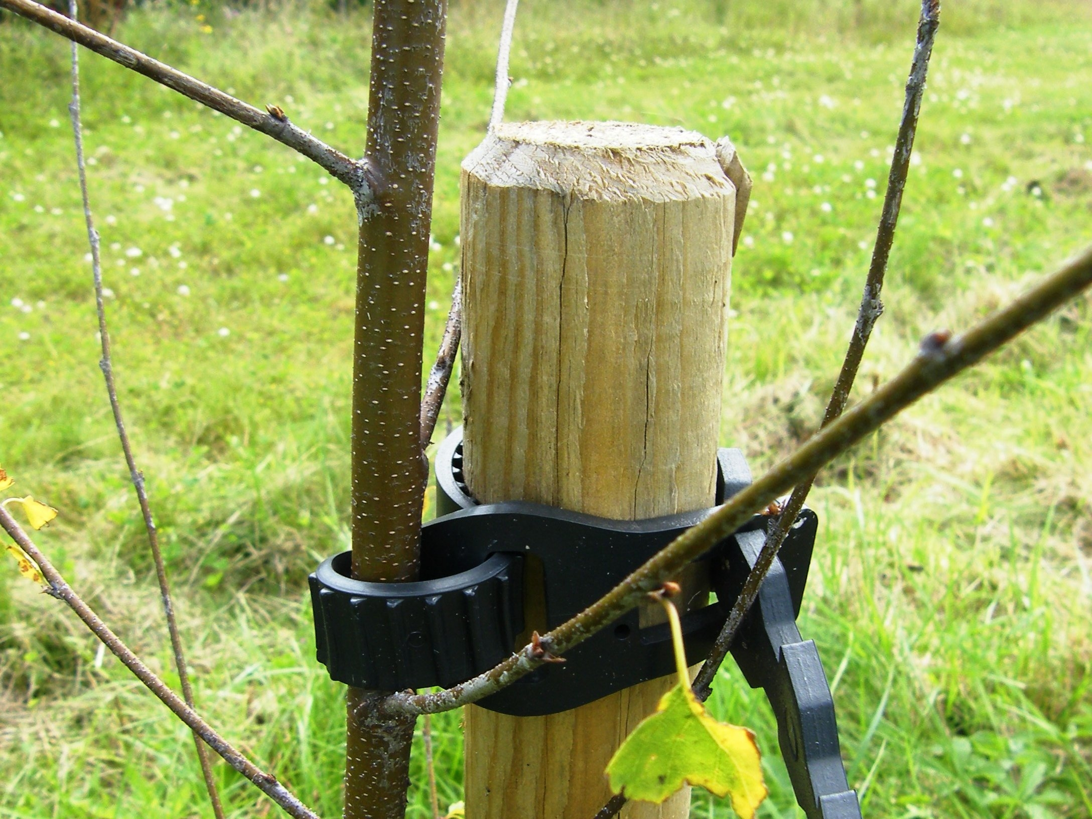 Staked tree with adjustable tie