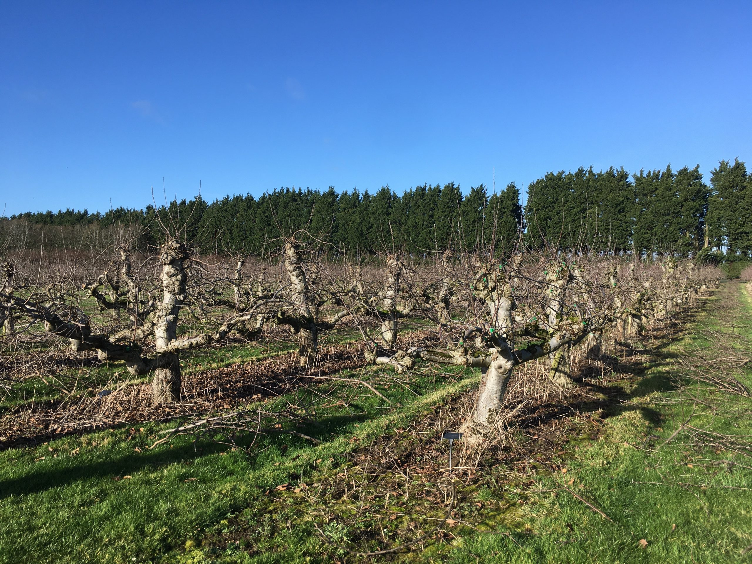 Waterperry Gardens Apple Orchard - January 2020